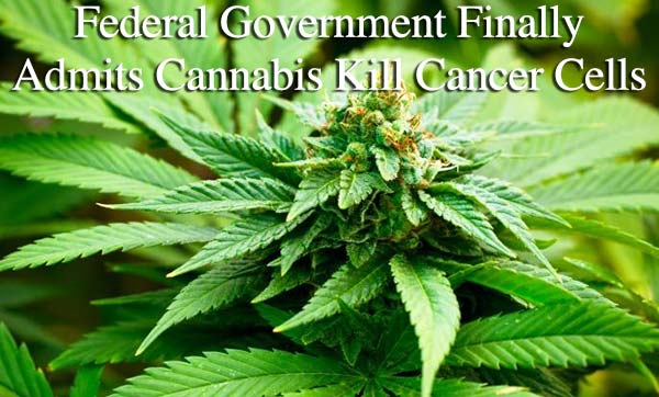 Federal Government Finally Admits Cannabis Kill Cancer Cells