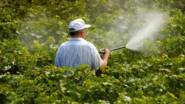 2 Simple Tricks to Remove Pesticides From Fruits and Vegetables