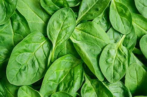 Top Five Health Benefits of Spinach