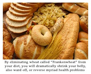 "Is Wheat Making You Gain Weight, must we be eliminating wheat called ""Frankenwheat"" from your diet, you will dramatically shrink your belly and also ward off or reverse myriad health problems"