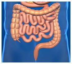 How microbes in the gut influence anxiety, depression