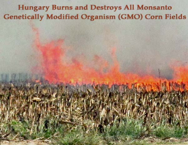 Hungary Burns and Destroys All Monsanto Genetically Modified Organism GMO Corn Fields