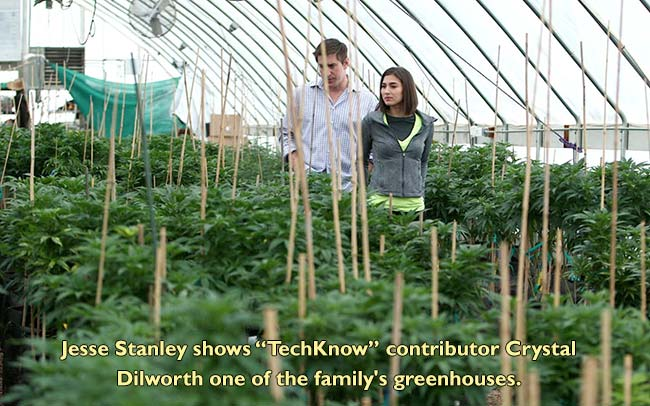 The Stanley Brothers: Colorado family who grow great medical Marijuana, Cannabis, Weed or Hemp